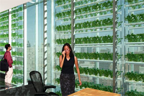 vertical greenhouse in an office
